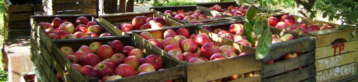 19-apples