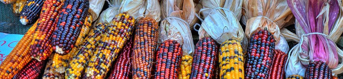 18-corn
